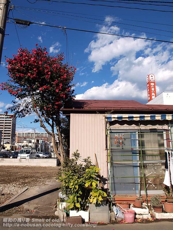 Pc068901_hosigaki