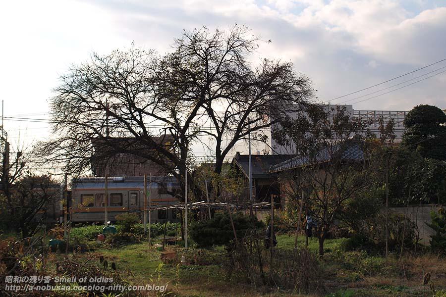 Pb298482_tree