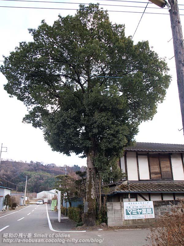 P2081817_largetree