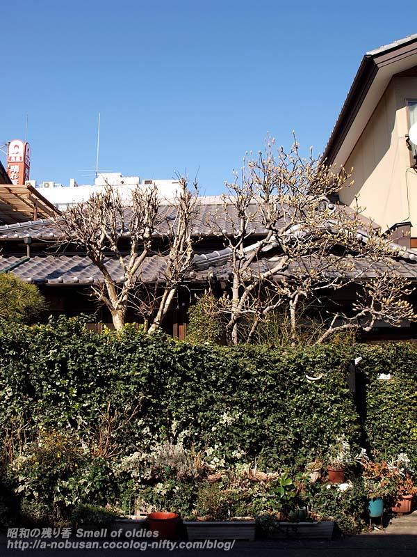 P2211351_gardentree