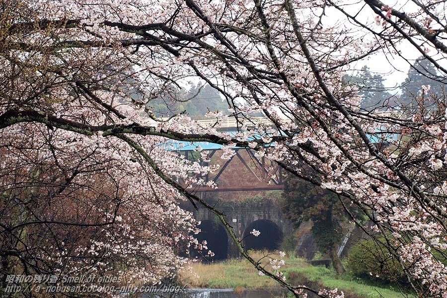 P4050005_fujikogawa