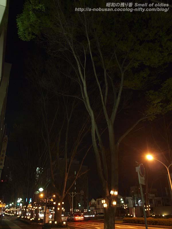 P4100248_tree