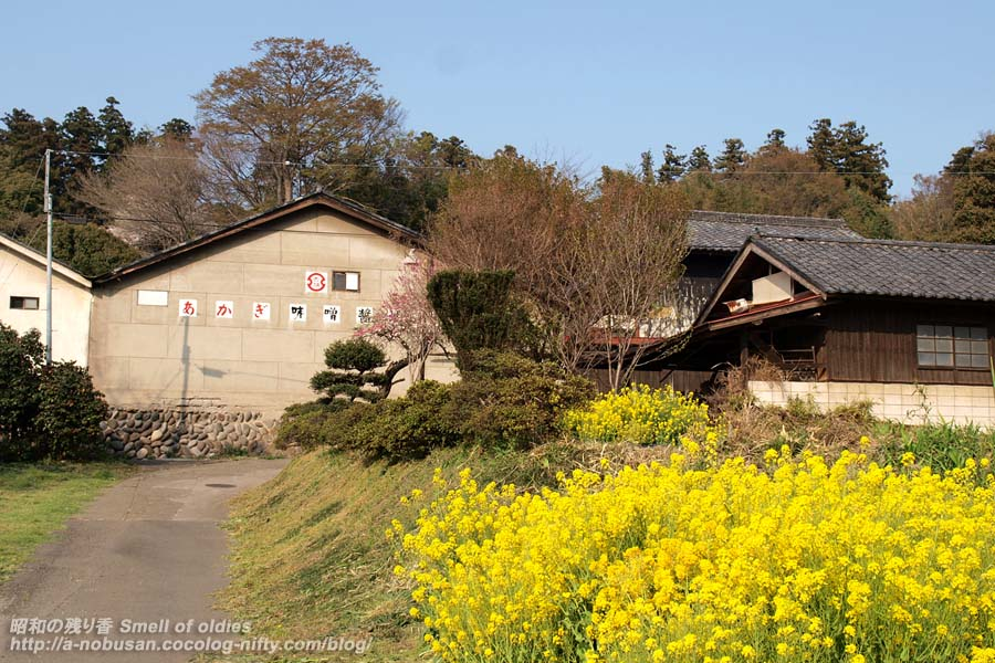 P4120122_akagimiso
