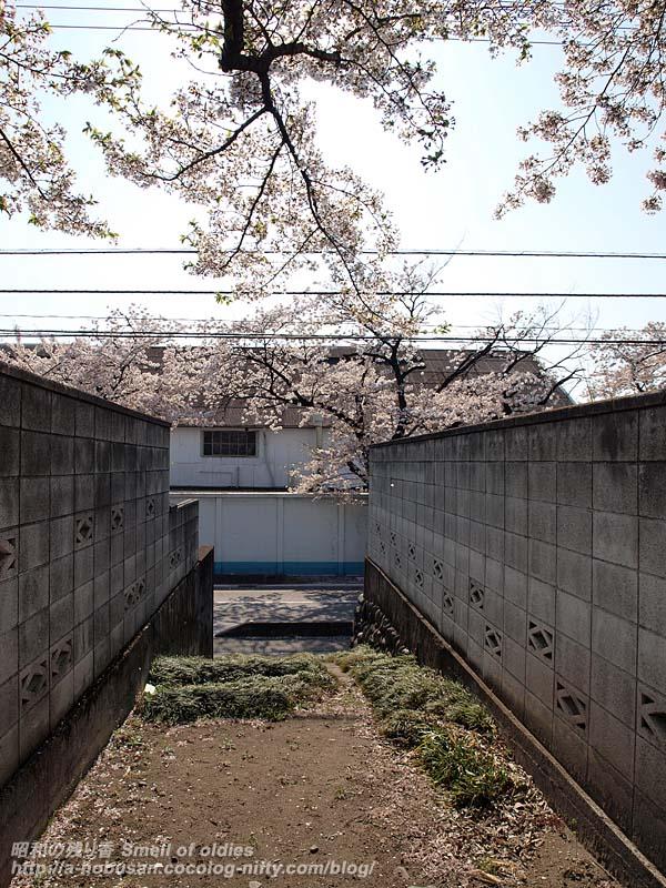 P4110512_fujikikai