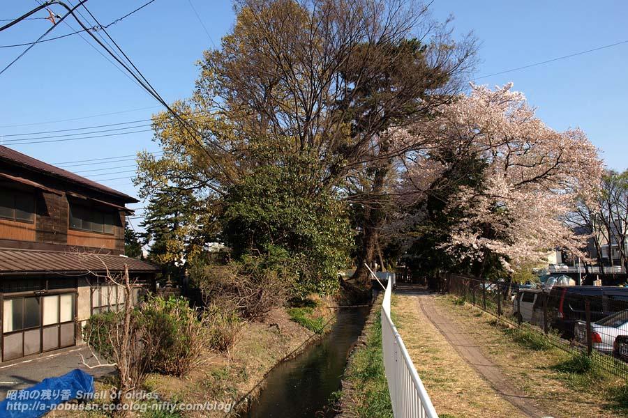 P4110674_maebashikouen