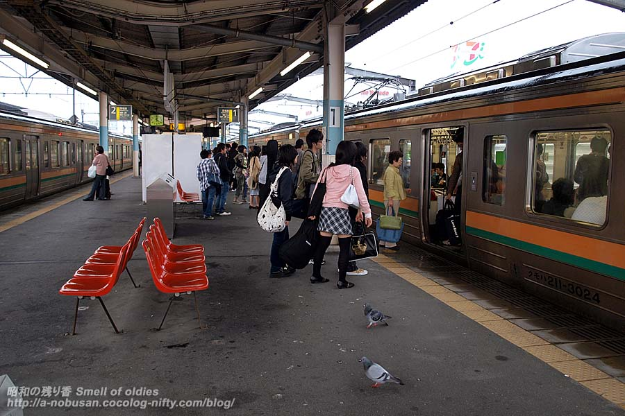 P5060012_pigeons