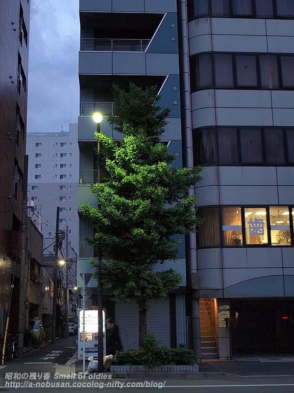 P5130077_tree
