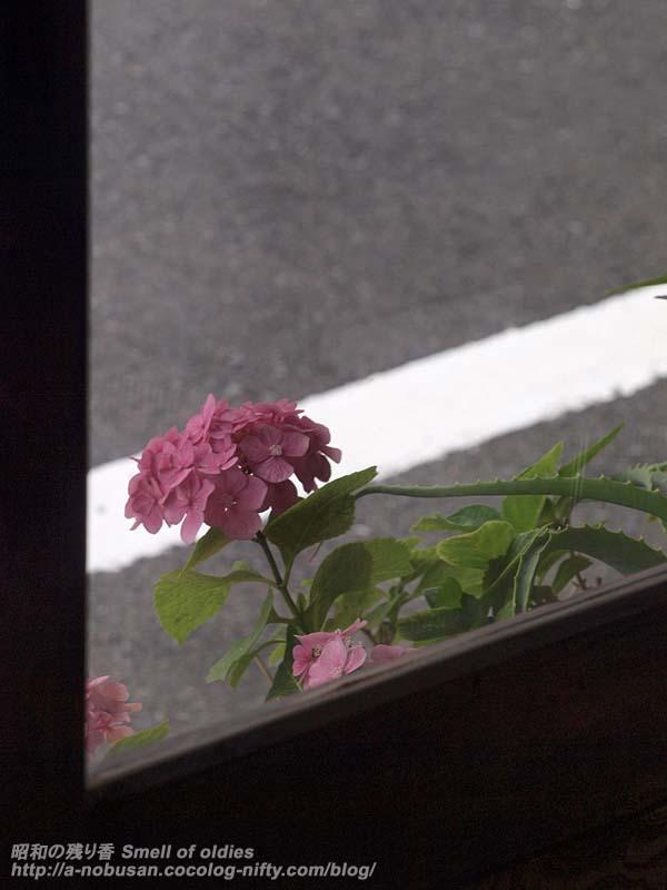 P6200234_flower