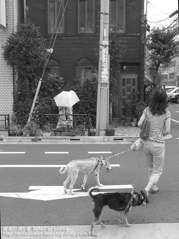 P7180158_inu_no_sanpo