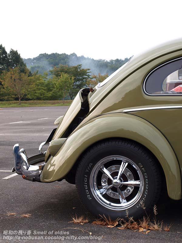 P8301696_bug_rear