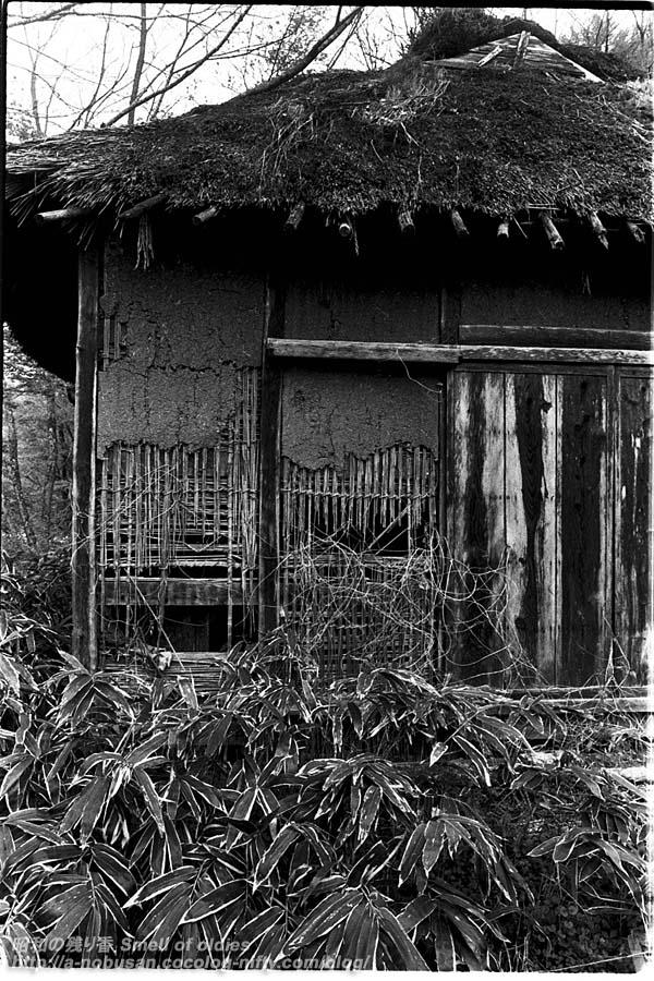 198005_01_23u2_haioku