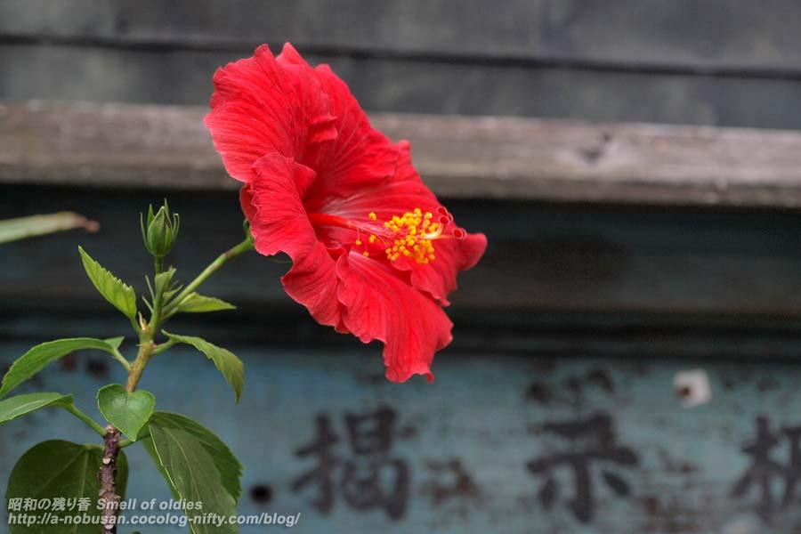 Pa243759_flower