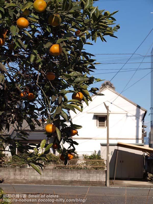 Pc063359_orange_and_kura_2