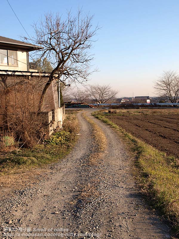 Pc230509_azemichi