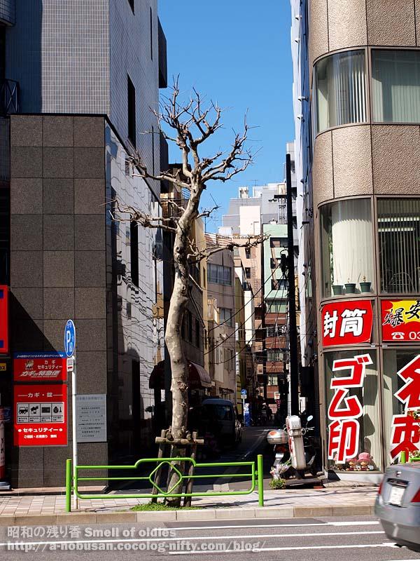 P3110266_hisamatsu_riji