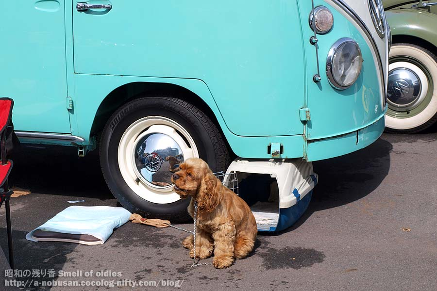 P3210158_dog_and_vw_bus