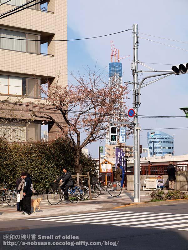 P3270158_sakura_skytree