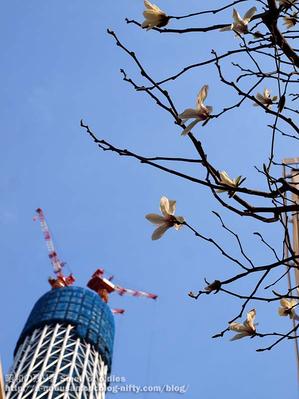 P3300630_skytree_and_flower