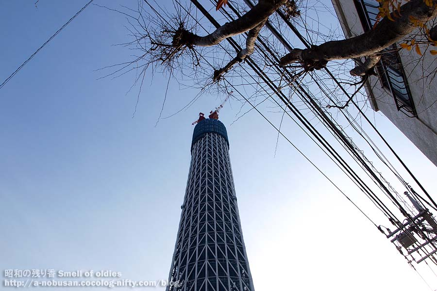 P3300659_skytree_and_tree