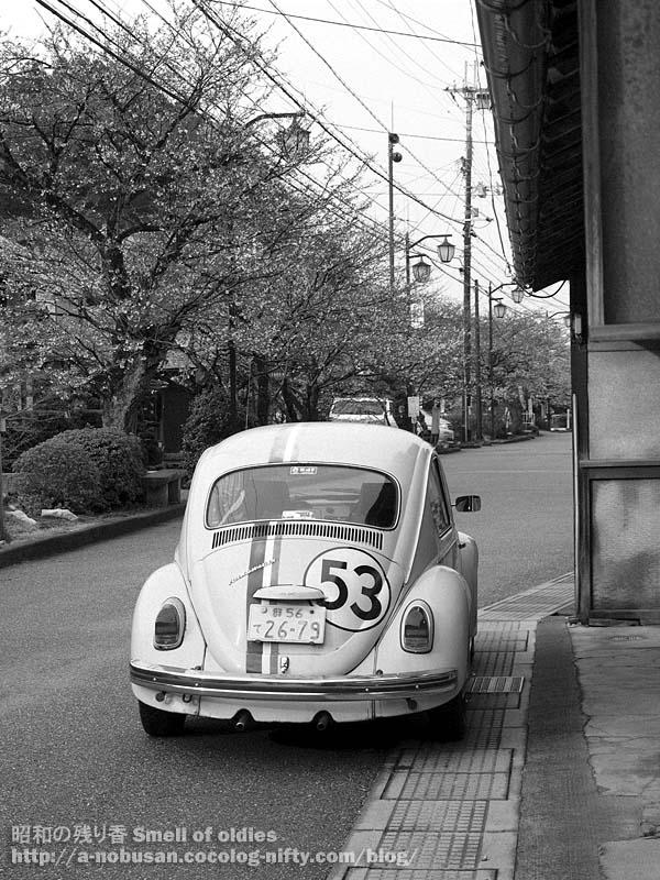 P4050038_69_sakura