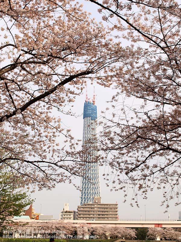 P4090433_tokyo_sky_tree