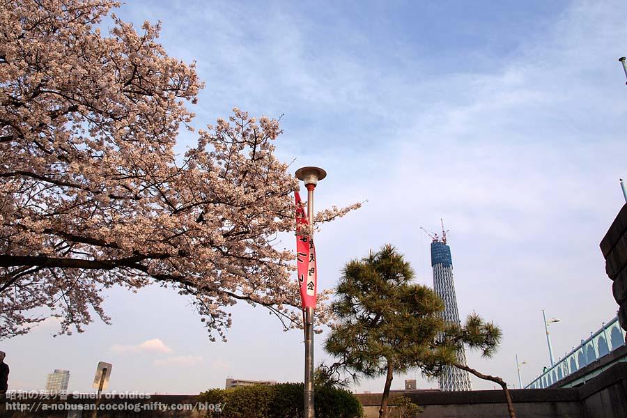 P4090506_gaito_sakura_skytree