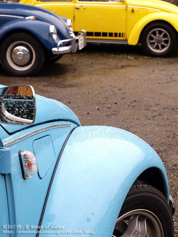 P4110271_sky_blue_beetle