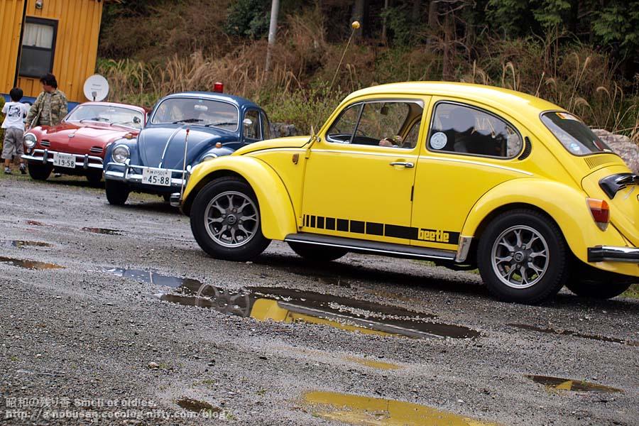 P4110799_yellow_beetle