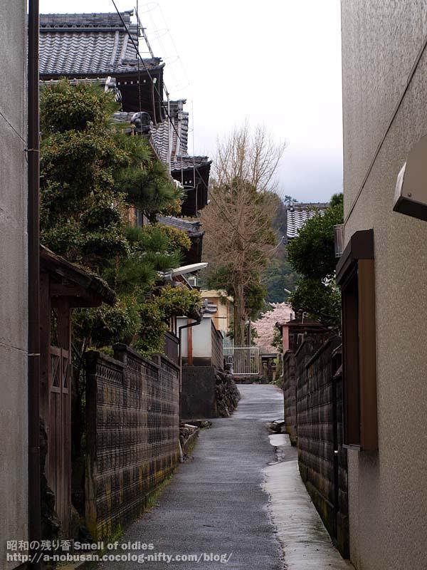 P4120423_kinomoto_roji