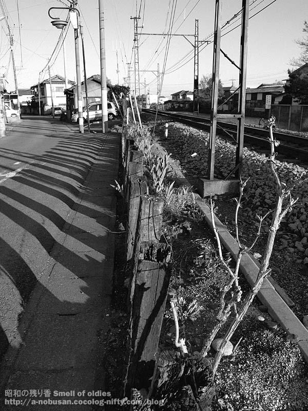 P4240196_makuragi