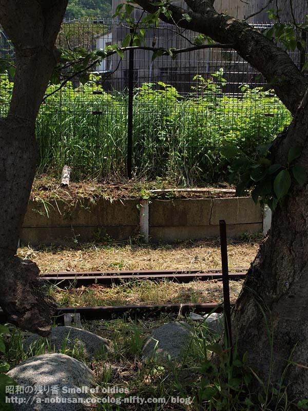 P5050410_ueki_and_railroad