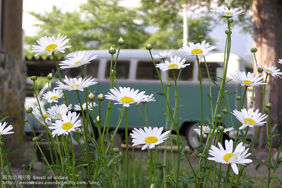 200606030046_bus_and_flower