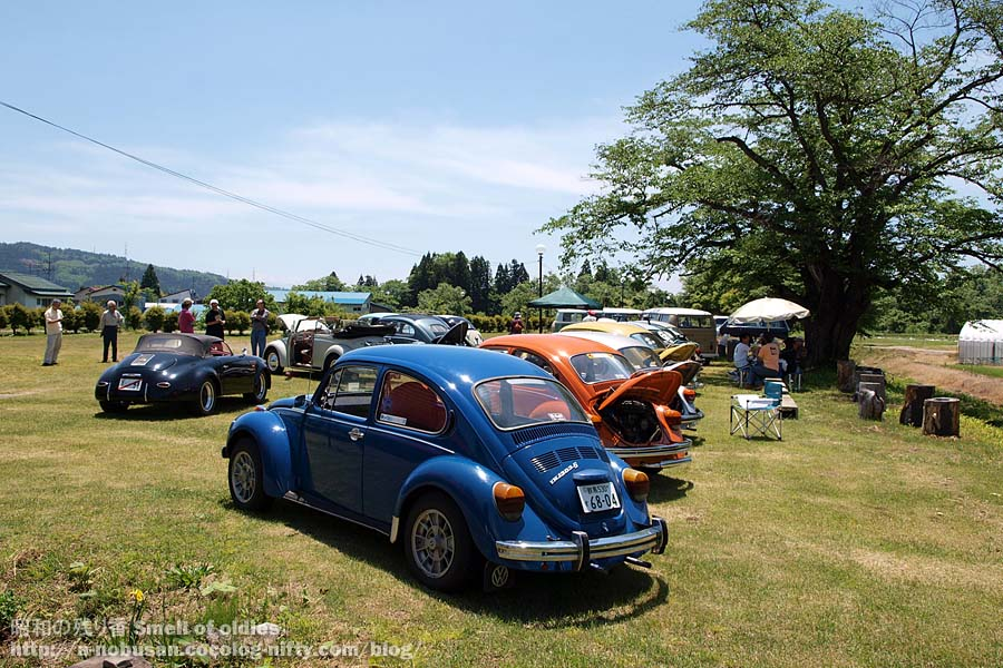 P6060216_vw_beetles