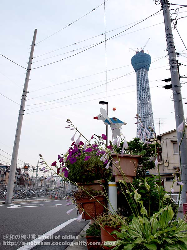 P7010364_shitamachi_oshiage