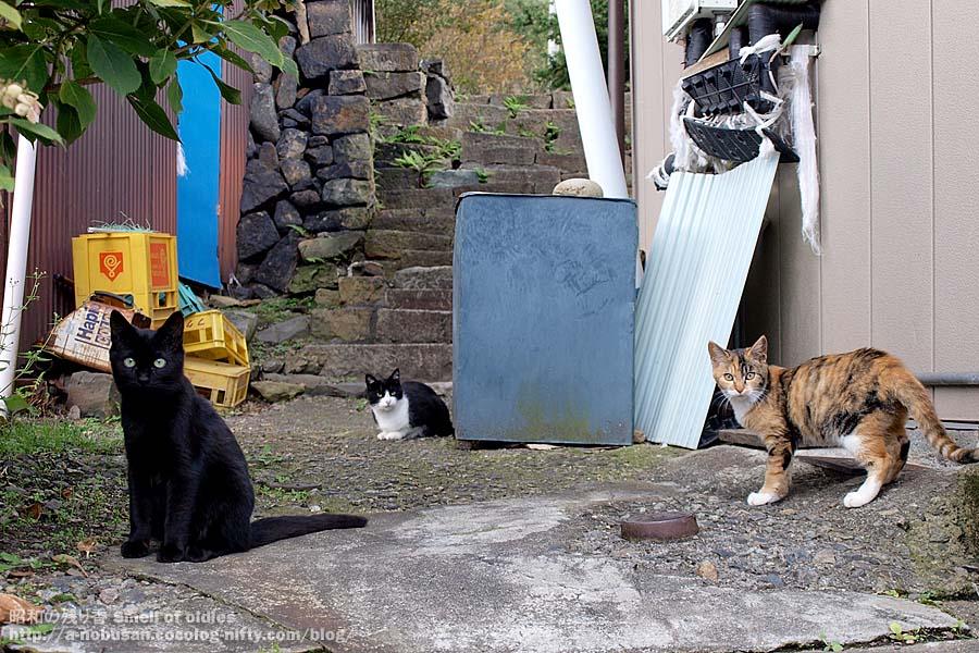 Pa110082_tsudo_cats