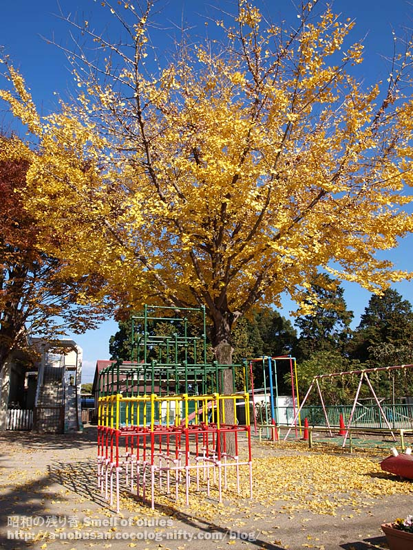 Pb270044_hoikusyo_ichou