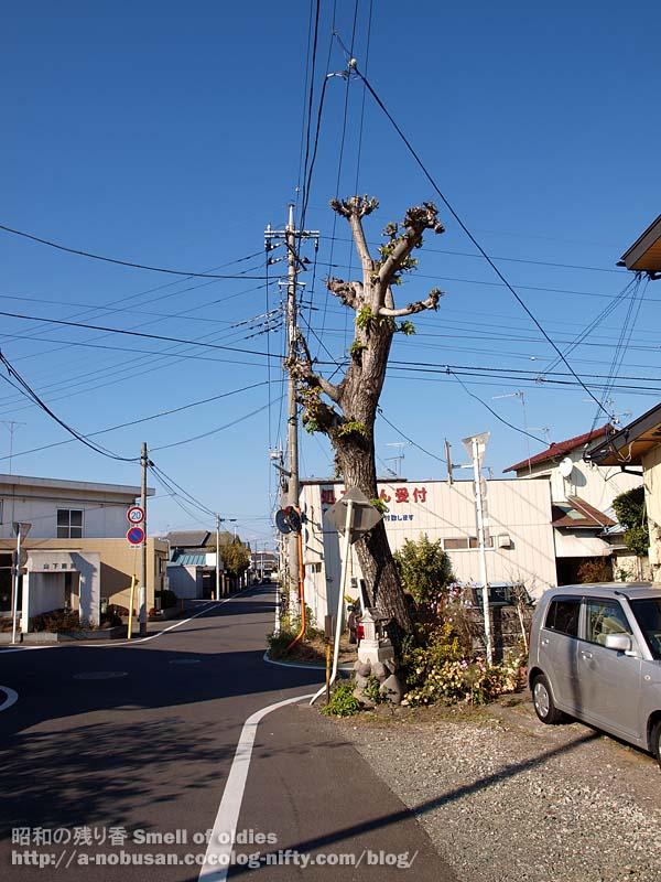 Pb270106_okina_kinoaru_kado