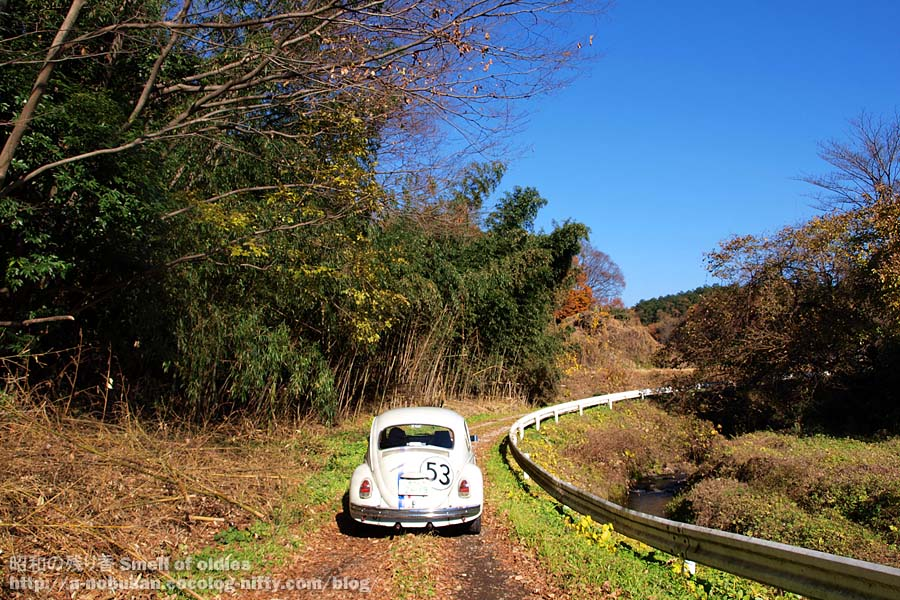 Pc052318_kisogawa_beetle