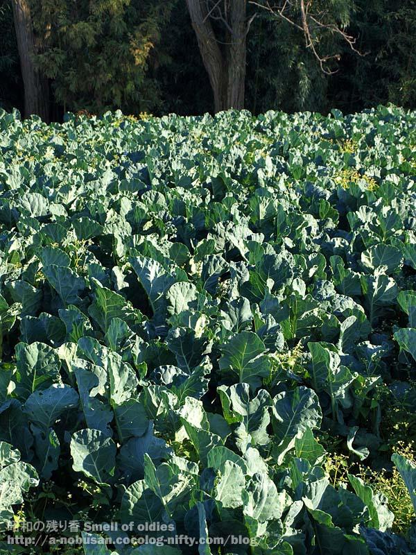 Pc052406_broccoli_farm
