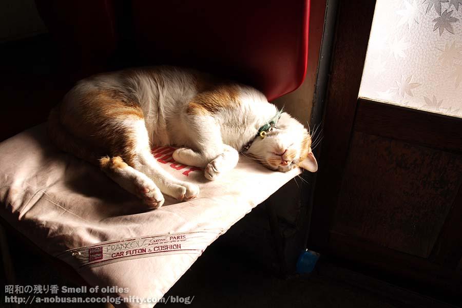 Pc042069_cat_chaplin