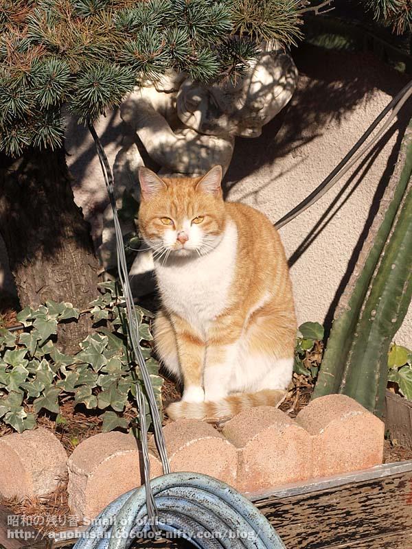 Pc113154_cat_bentendori