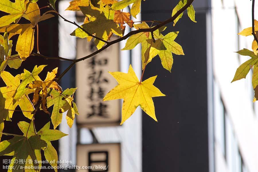 Pc154750_odenmacho_kaede