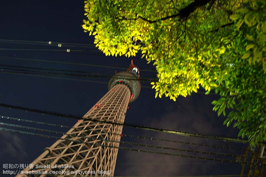 P2170465_night_sky_tree