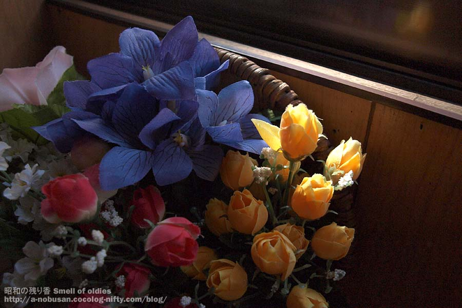 P2190241_blue_and_yellow_flower