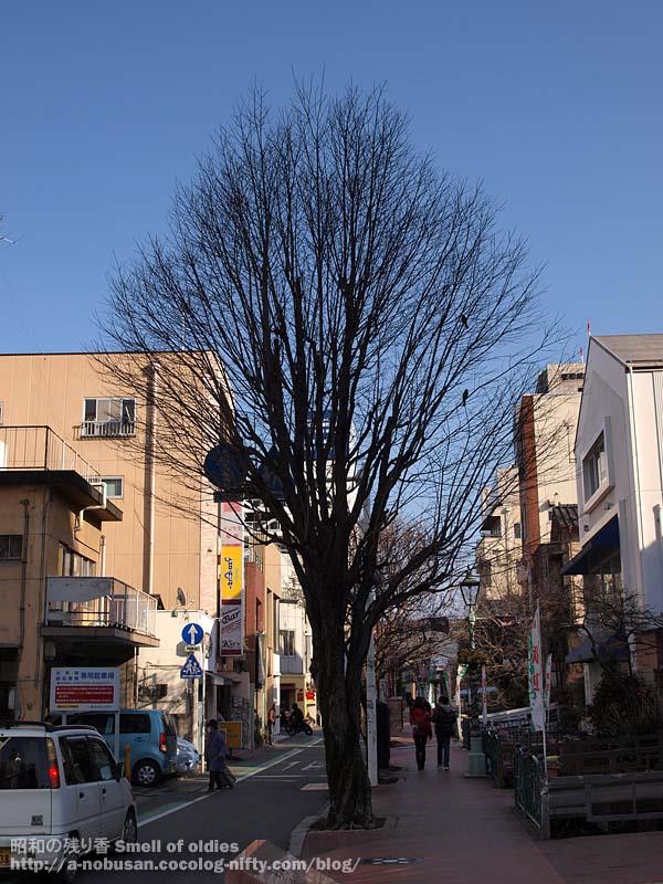 P2260188_babakawa_dori
