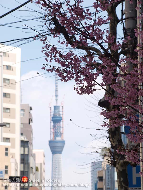 P3170118_ume_tokyo_sky_tree