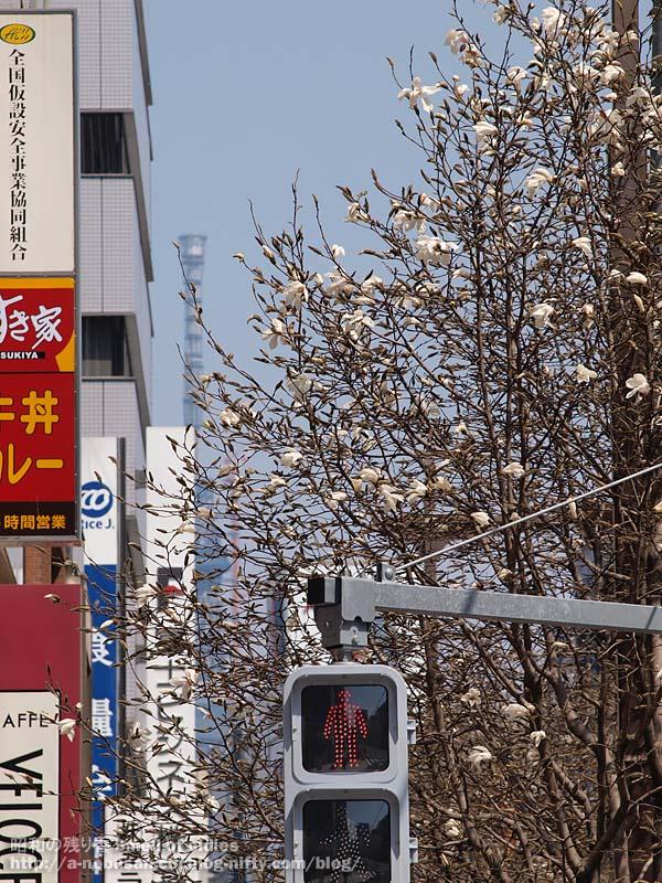 P3250020_sukiya