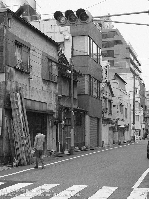P4020675_inu_sanpo