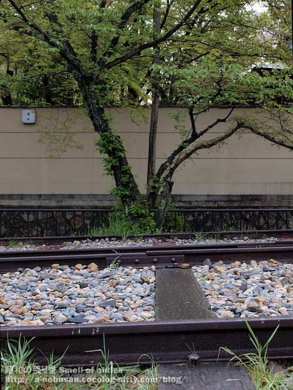 P4240160_rail_and_tree