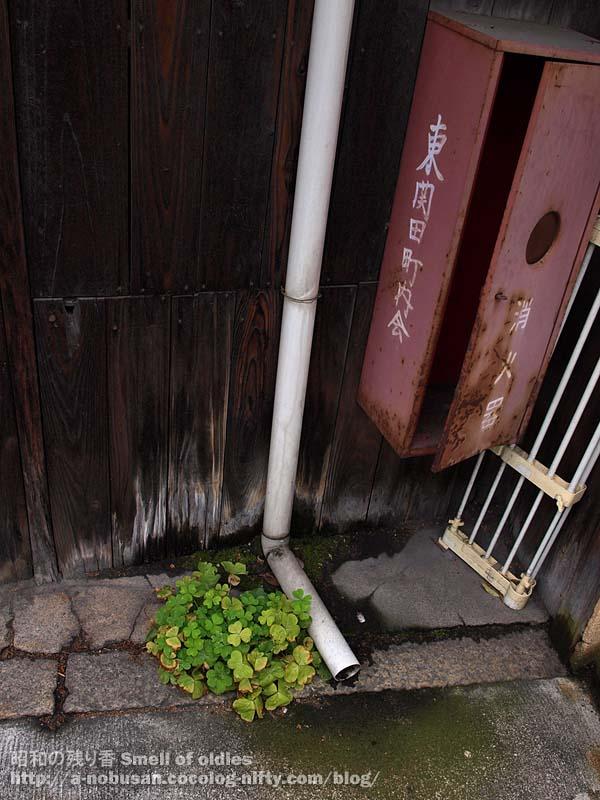 P4240480_kyoto_zassou